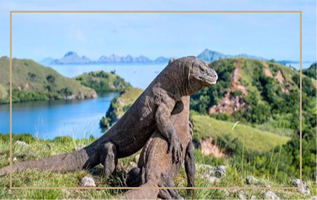 National-park-dragon-komodo
