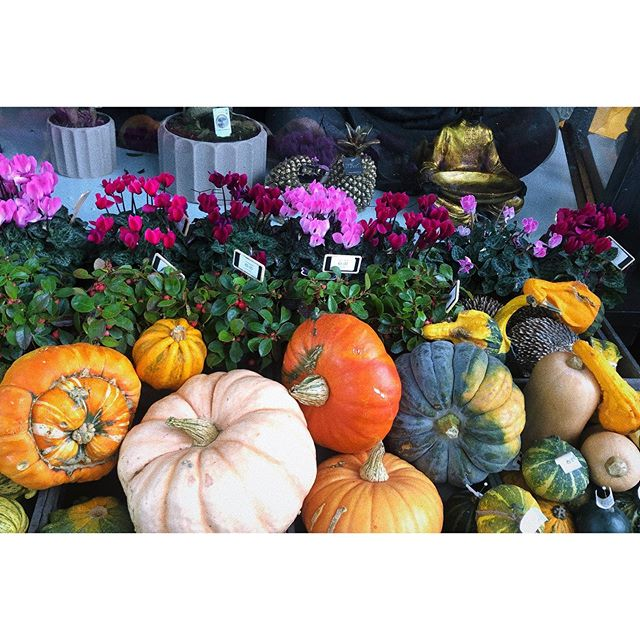Gorgeous autumnal display @yes_flowers 🍁 #galway #pumpkin #ireland #autumn