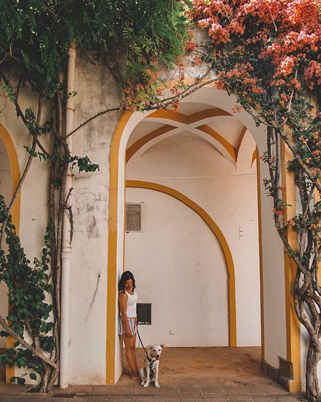 Last few days have been busy showing #porto to my crazy spanish girls. Days have been foggy but incredibly fun driving around different cities and places. So today after all the holidays (I'll talk about S João later on), trips, typical lunches and wines tastings I'm dreaming about relaxed afternoons around #alentejo. • • Os últimos dias têm sido dedicados a mostrar o meu Porto às minhas espanholas do coração. Os dias estiveram meio encobertos mas sem dúvida divertidos, a conduzir por diferentes cidades e lugares. Por isso, hoje, depois da maior festa do ano (vou falar sobre S João mais tarde), viagens, almoços típicos e degustações de vinhos, vou sonhando com as tardes relaxadas pelo #alentejo.