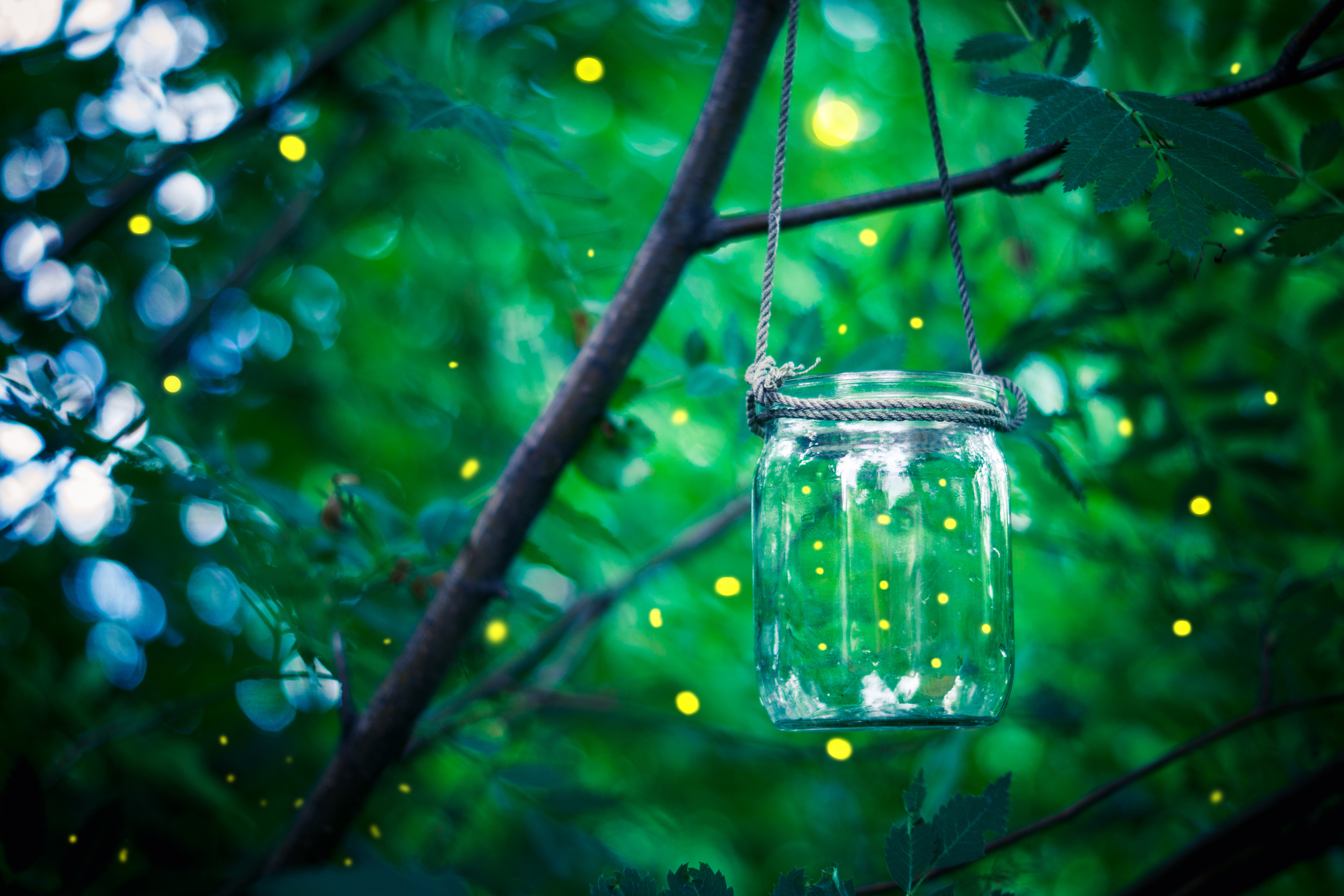 Photo by Mindstyle/iStock / Getty Images  For other amazing photos of fireflies/lightening bugs, check out this website!  http://www.fireflyexperience.org/photos/