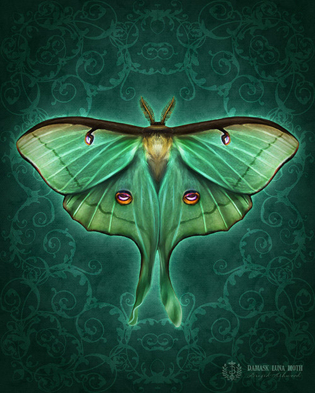 Damask Luna Moth