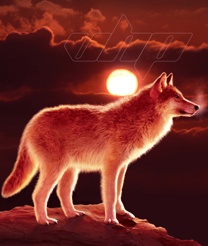 Wolf in Sunset