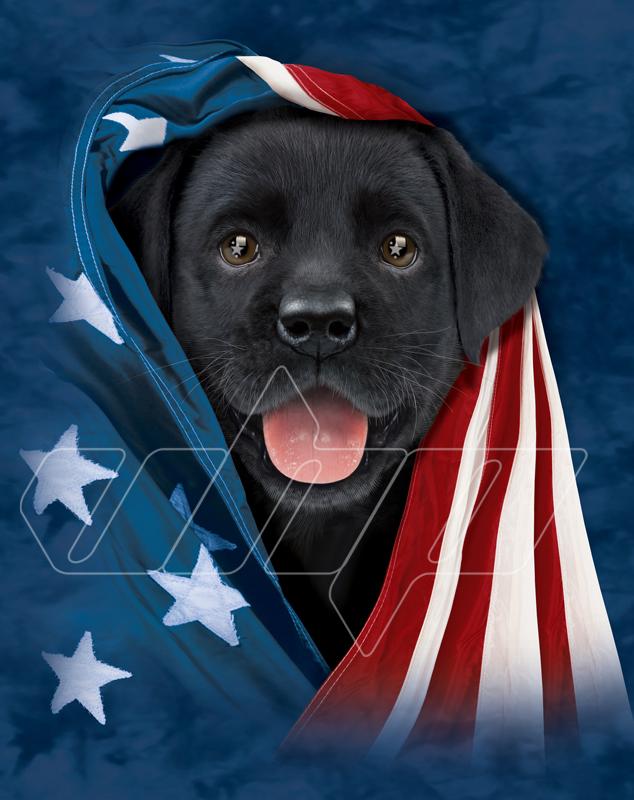 Patriotic Black Lab Puppy