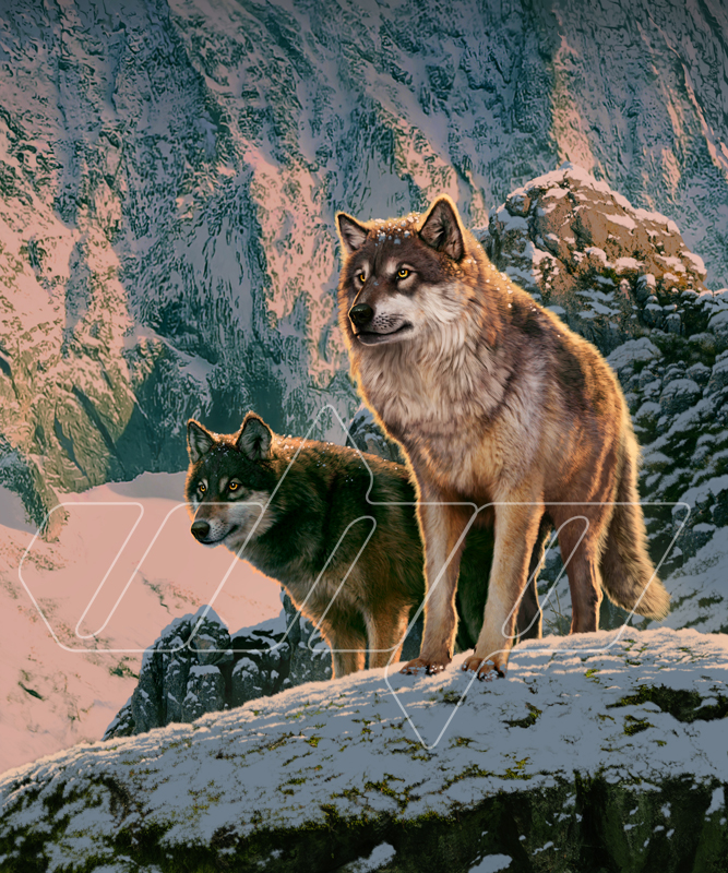 Wolf Couple in Sunset