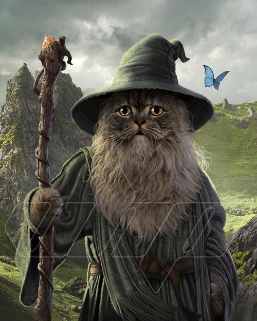 Catdalf.jpg