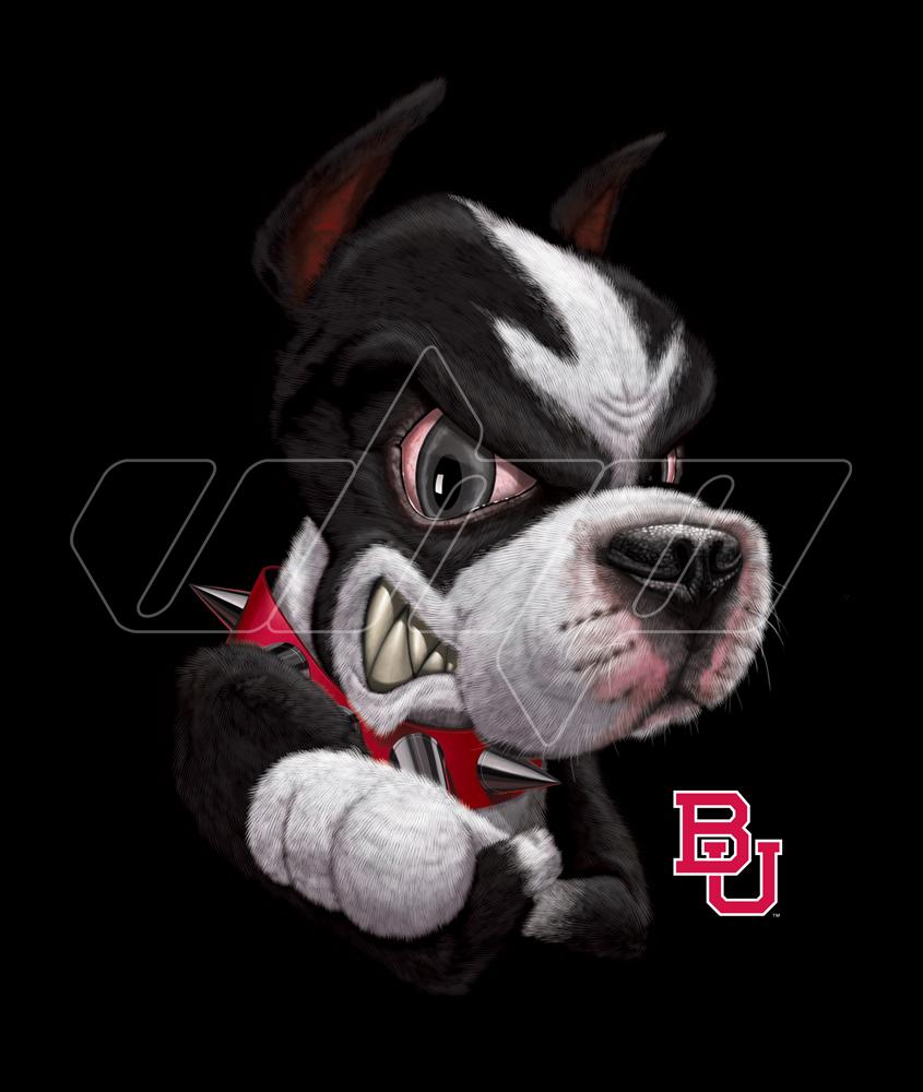 Boston University Terrier black.jpg