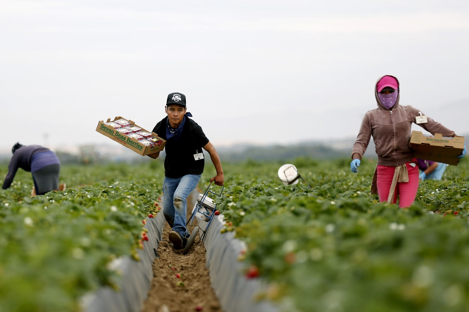 Desired for their labor, rejected as neighbors. Farmworkers in California face hostile communities - Los Angeles Times | June 2, 2017
