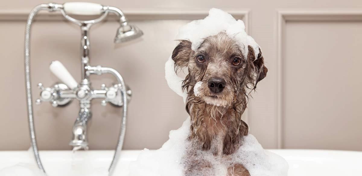 dog-in-bath-tub-fb.jpg