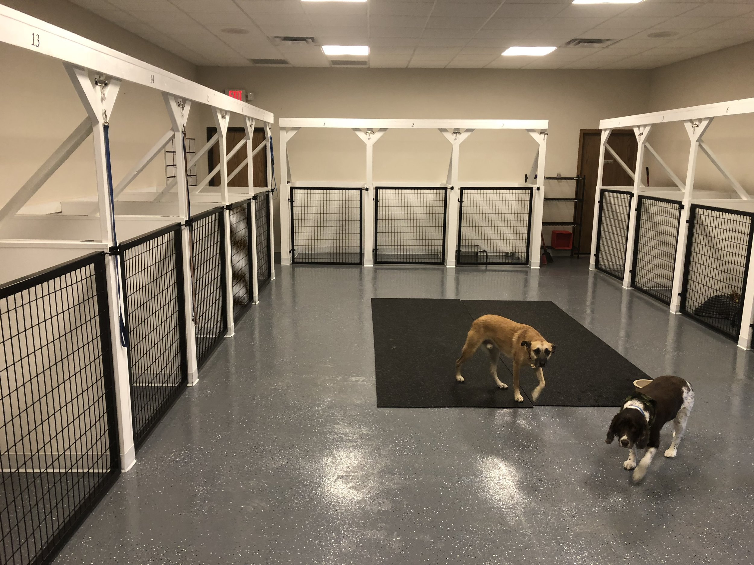 Main Kennel Room