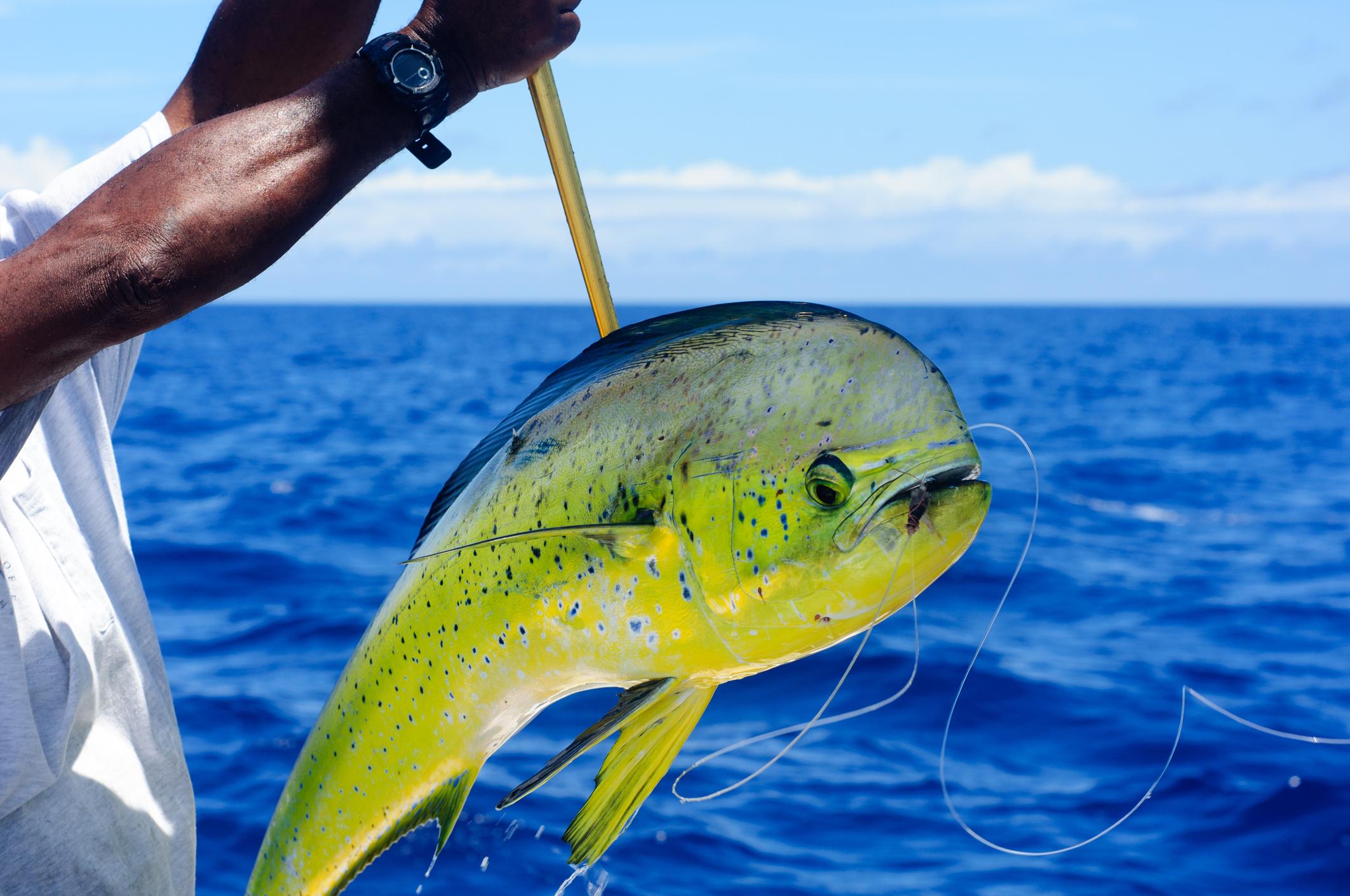 Grand Bahama Fishing