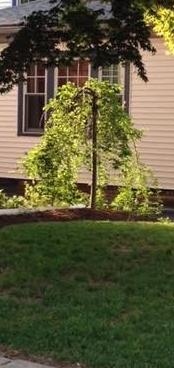 Favorite little tree.