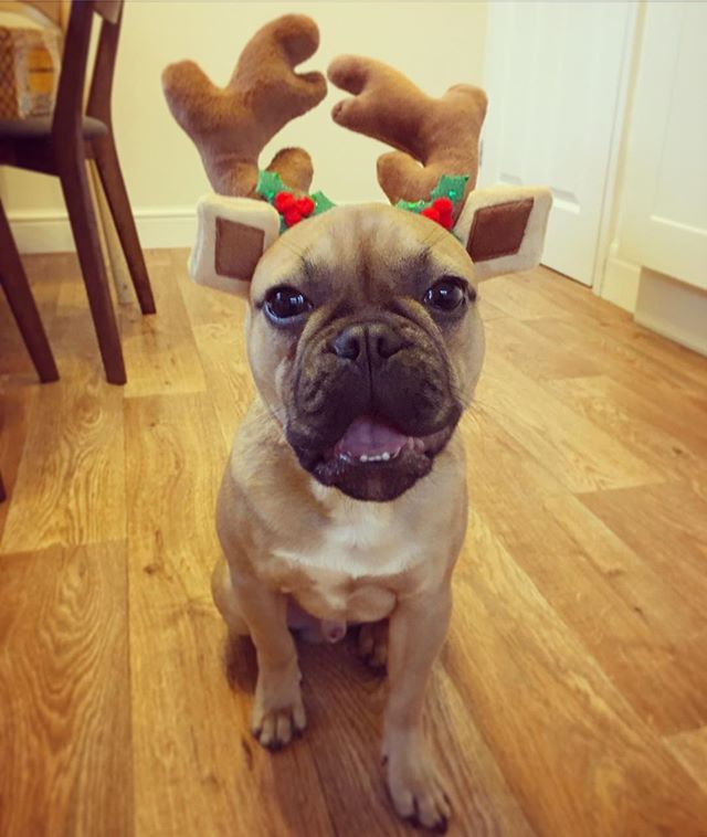 Merry Christmas from Louis and the Crushed Bean team! ❤️