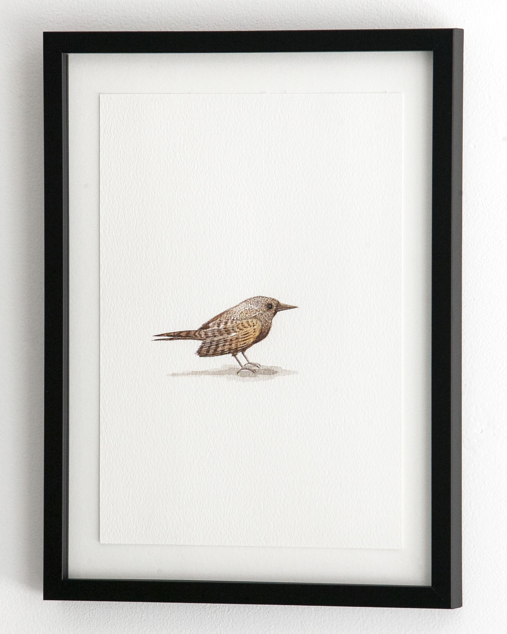 c_bird_8_2.jpg