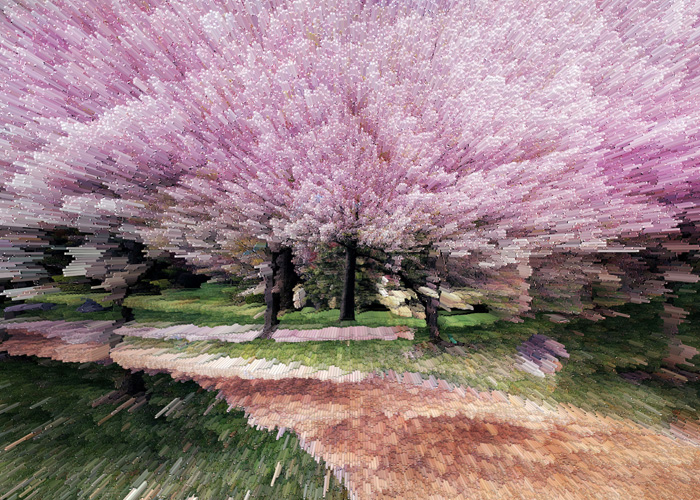 Cherry Blossoms | Tricia Coyle | Digital Photography