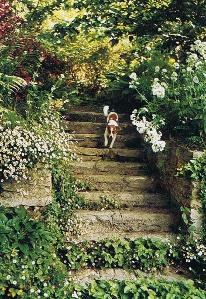 6-Garden-steps-704x1024.png