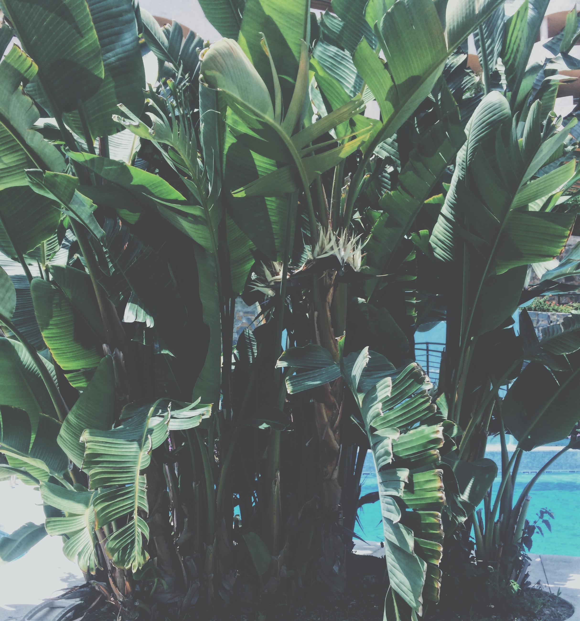 Marbella_Puerto_Banús_green_leaves