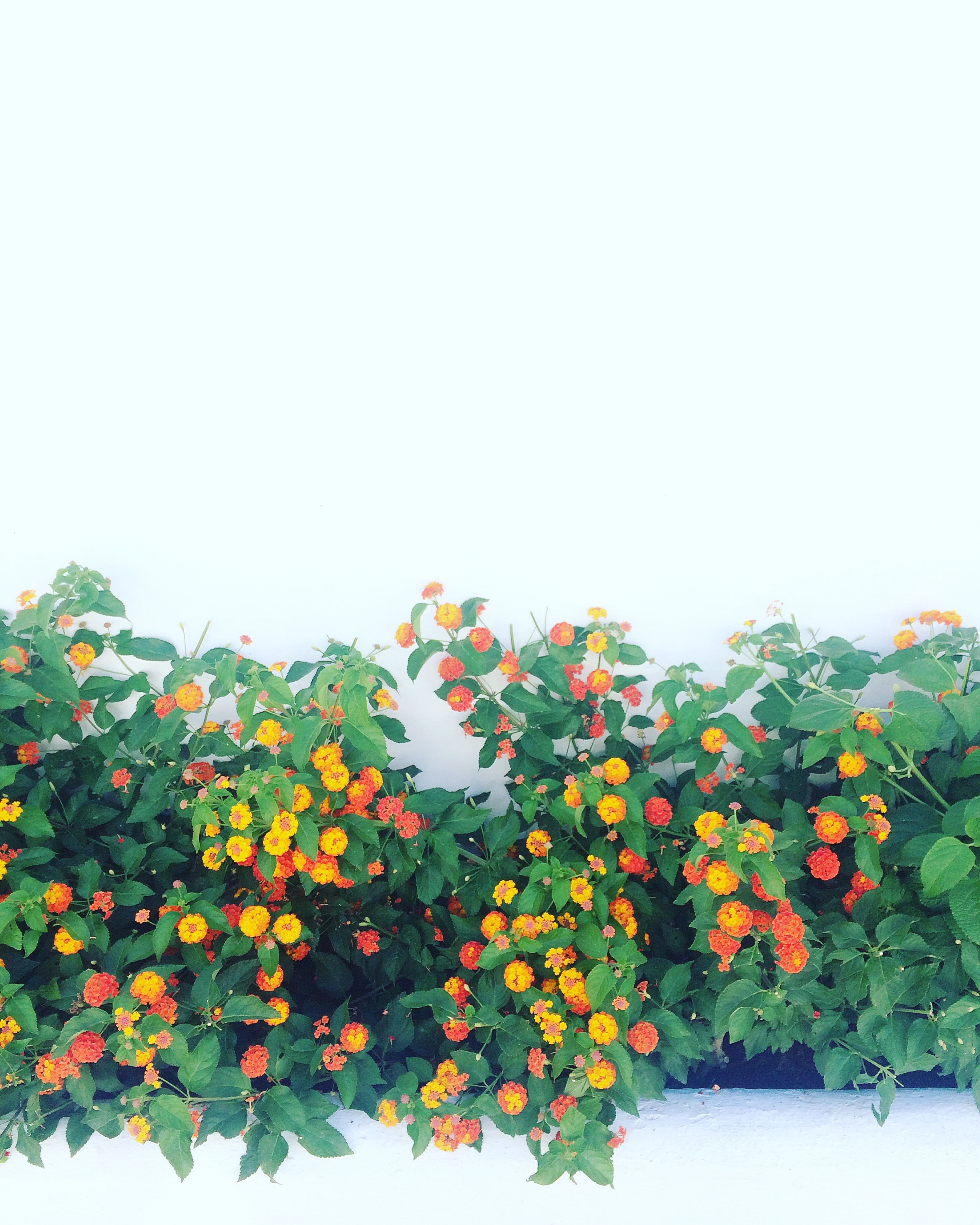 Neighbourhoods in Marbella are adorned with beautifully coloured flowers and plants