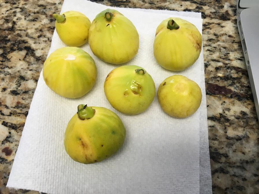 Seven Yellow Figs