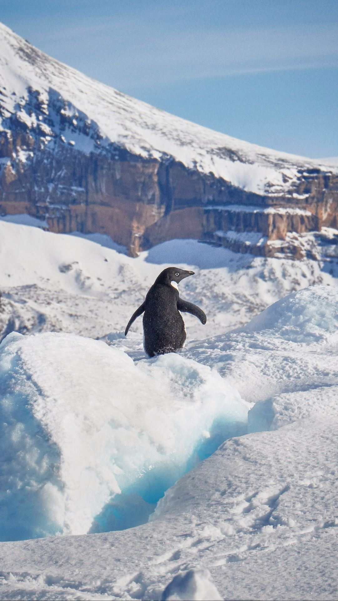 Wallpaper iPhone travel photography Antarctica penguin cute nature widlife iceberg