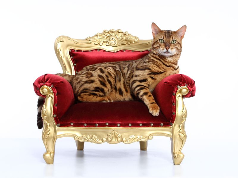 Cats rule the world. But how did they get here? (Tierfotoagentur / Alamy)