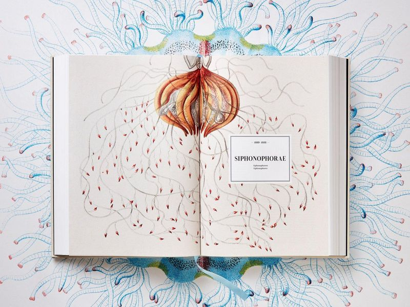 The stunning image that opens the Siphonophorae chapter in  The Art and Science of Ernst Haeckel . Each gelatinous siphonophore is actually a group of colonial organisms all living and working together. To grow, they clone themselves—each new minion specialized for a specific function. (© TASCHEN Köln/Niedersächsische Staats- und Universitätsbibliothek Göttingen)