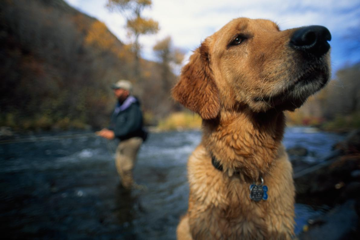 A fly fisherman and his golden retriever enjoy the Provo River in Utah. Canines, emerging research suggests, are more like humans than we ever imagined. (Cameron Lawson, National Geographic Creative)