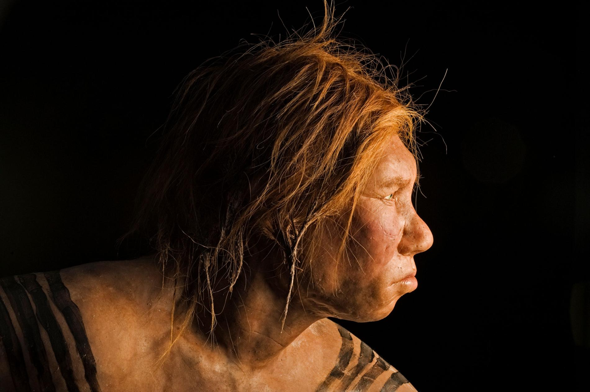 Unveiled in 2008, this reconstruction of a Neanderthal female was the first made using ancient DNA evidence. PHOTOGRAPHY BY JOE MCNALLY, NAT GEO IMAGE COLLECTION