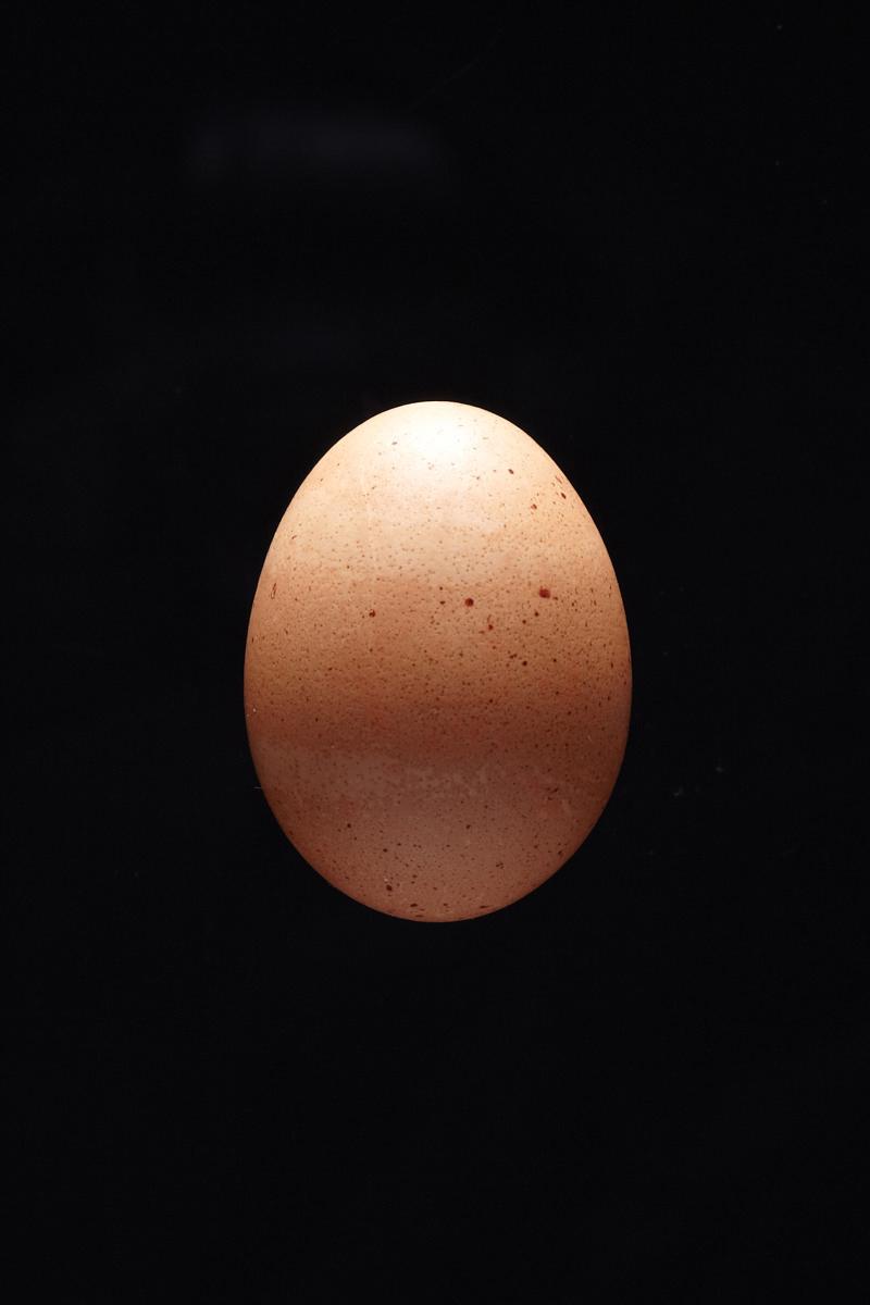 1501-01_Egg_4863.jpg