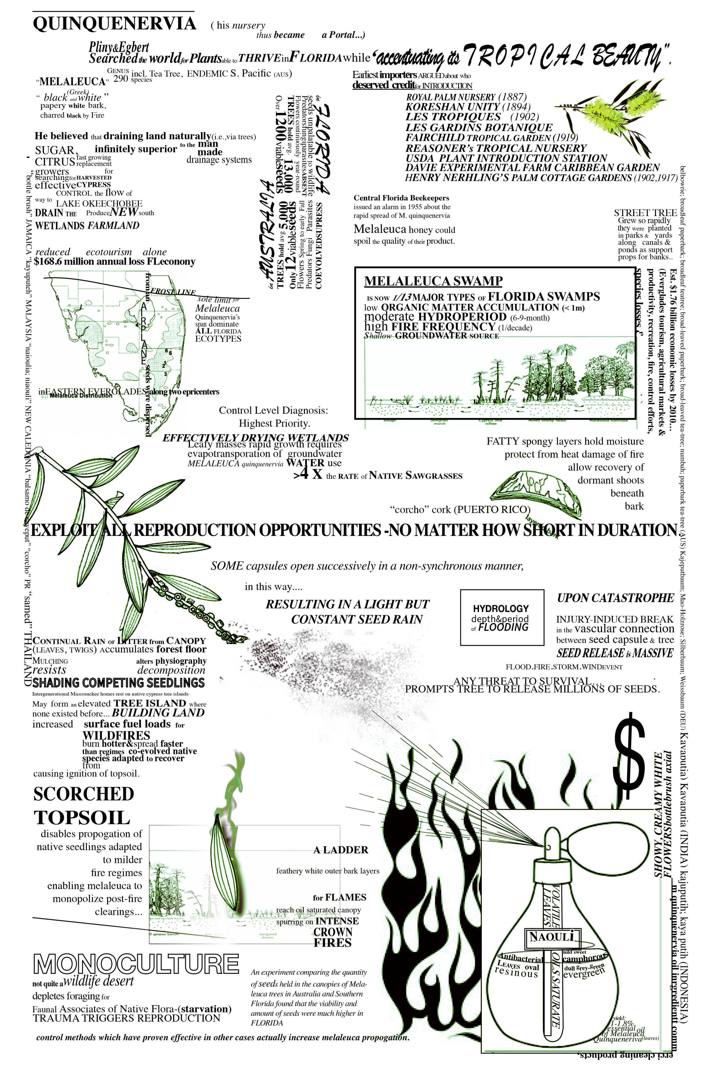 Melaleuca__11x17_rework_inprogress5_green.png