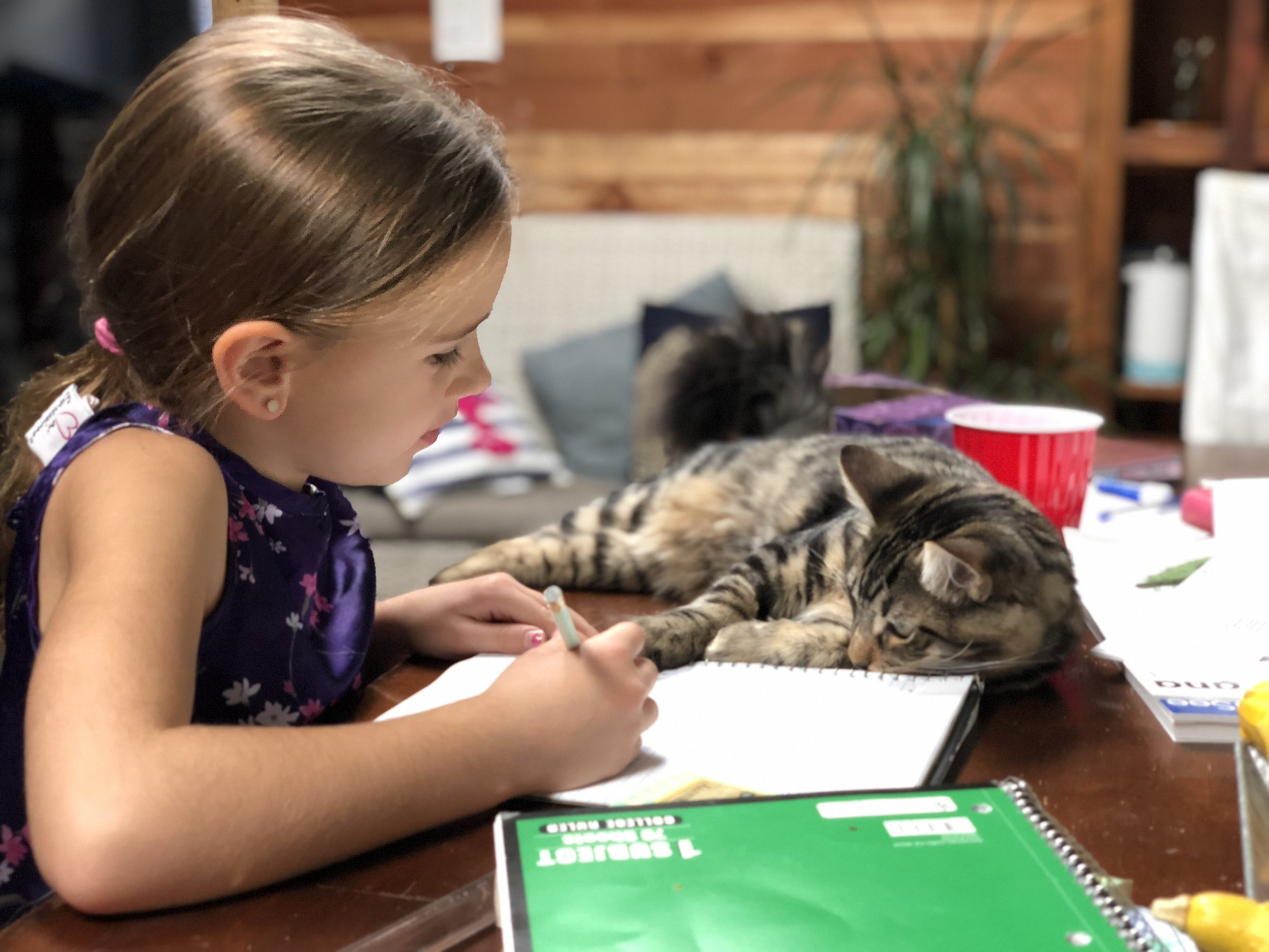 The Best Homeschool Curriculum Planning is done with a kitten