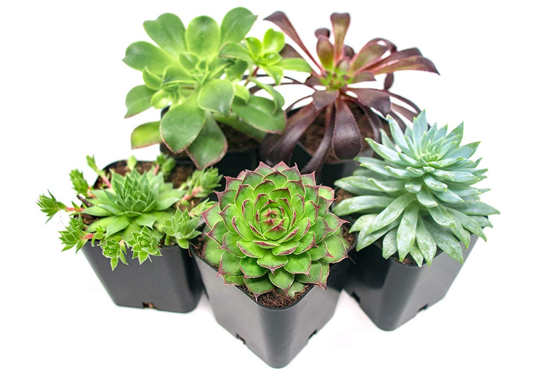 succulents-5-pack.jpg