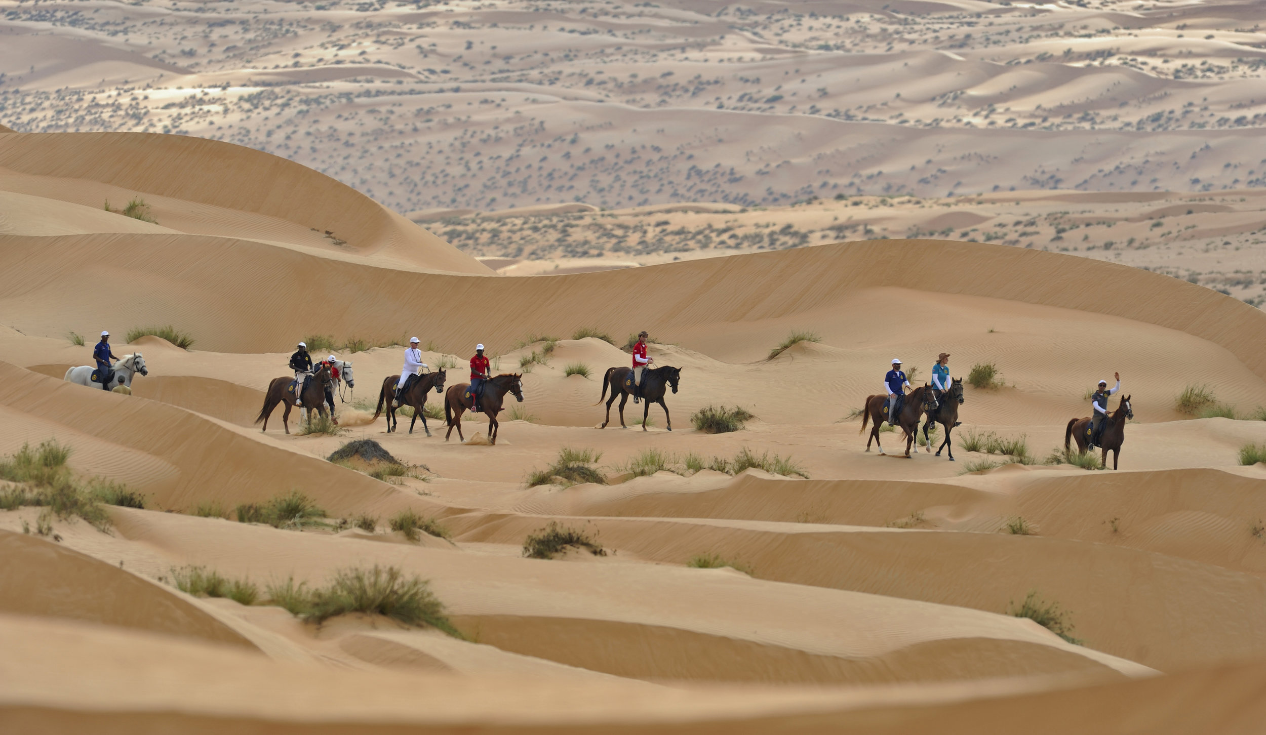 Gallops of Oman Cover.jpg