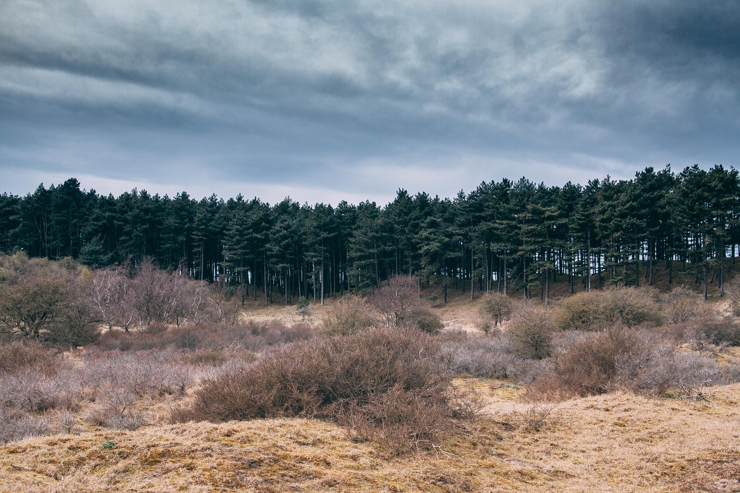 Nationaal Park Zuid-Kennemerland , The Netherlands  2012