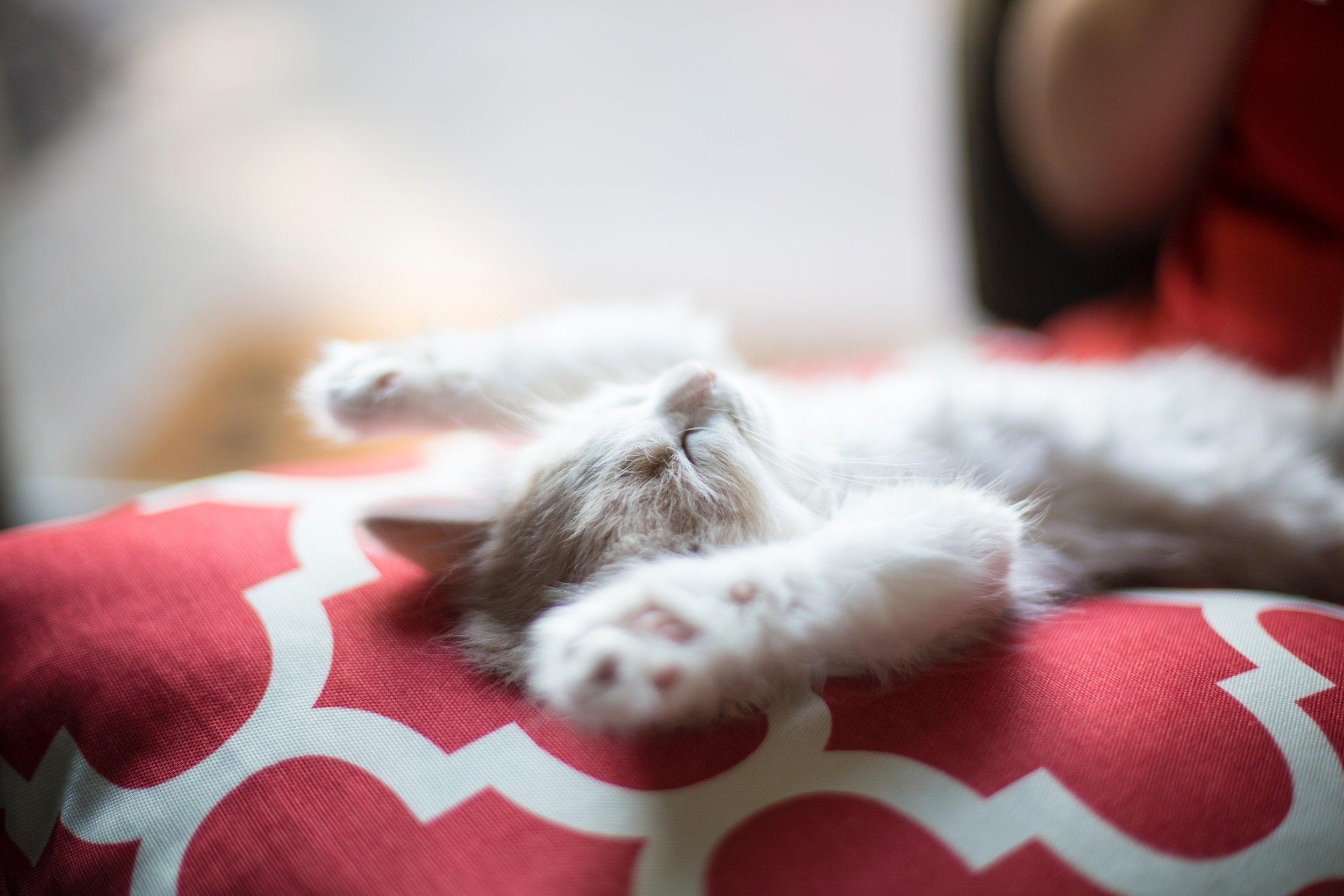 Cat rest.jpg