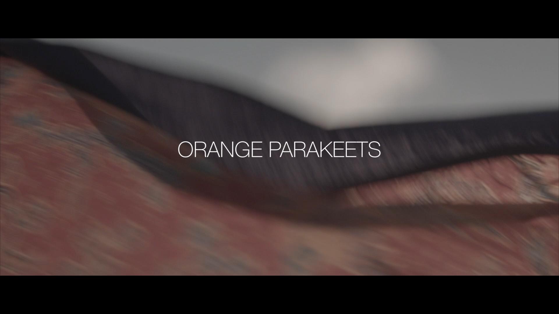 Orange Parakeets V2.00_00_10_06.Still001.jpg