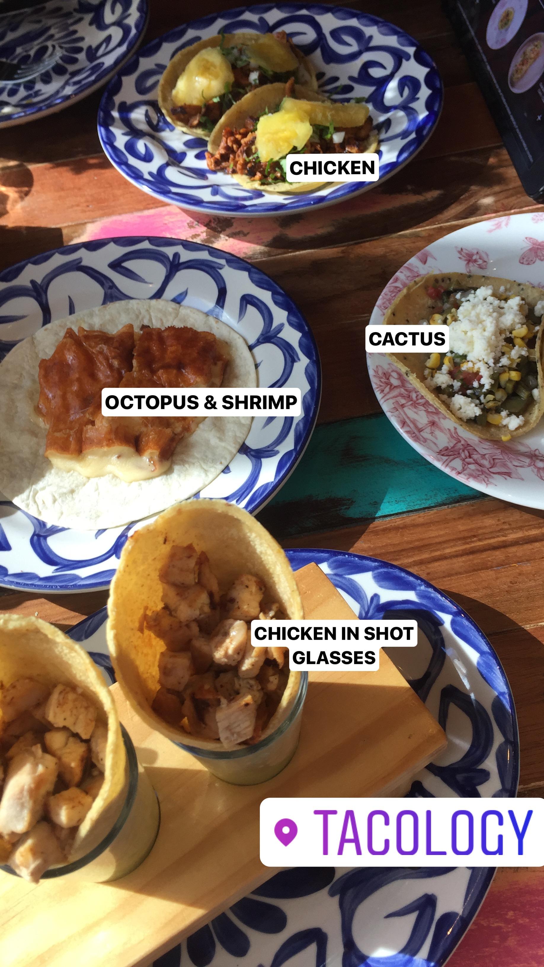 Tacology - Cactus taco, anyone?