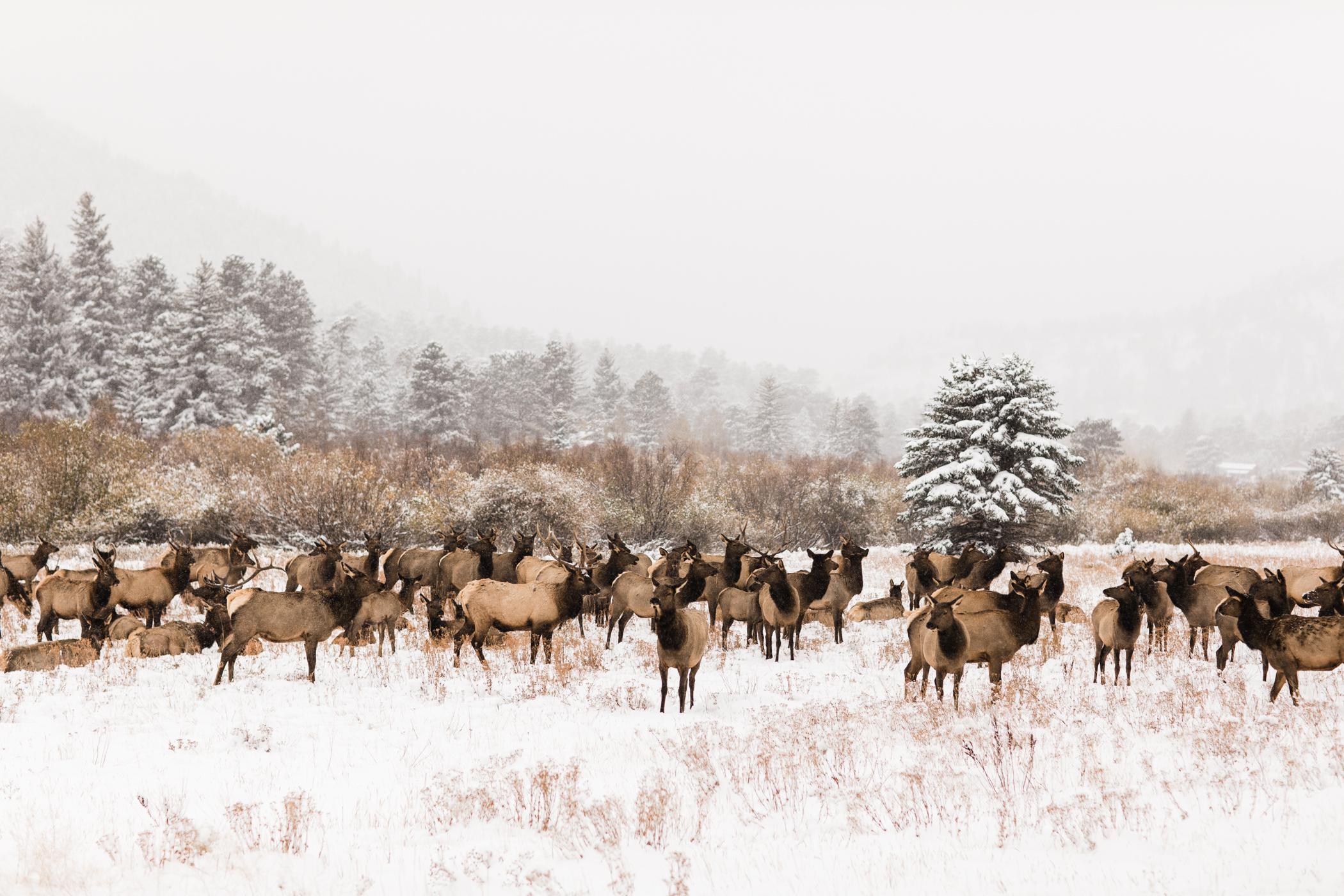 Snowy winter elopement Colorado Rocky Mountains Estes Park
