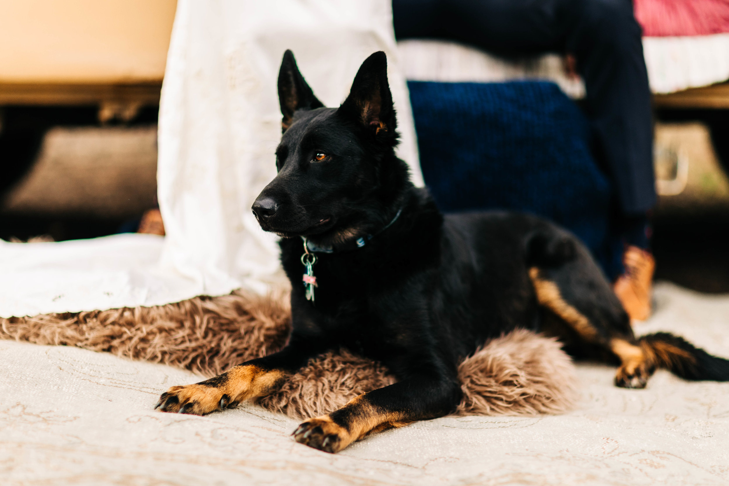dog at an adventure elopement | Colorado elopement photographers