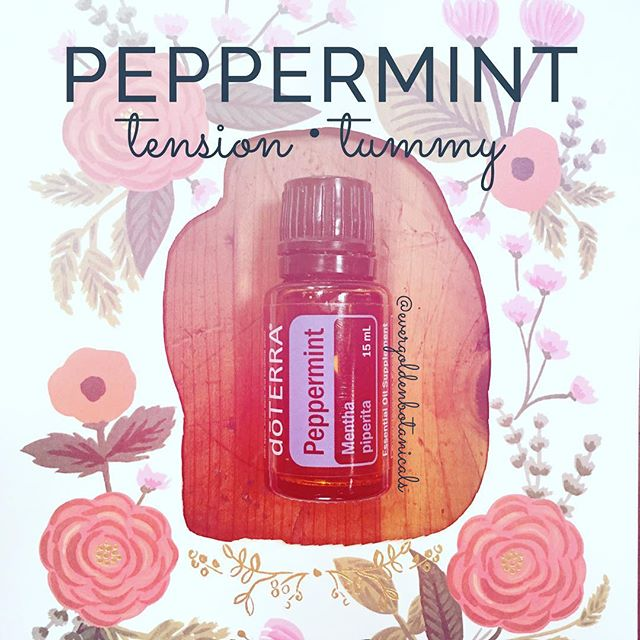 "Up next on the list of most used essential oils, and a must-have for any natural medicine cabinet: Peppermint, the oil of a buoyant heart. 💙🌿💙 Cooling and energizing, this oil is the favorite eo of so many oilers! Let's see how it can support us in our day to day.  T U M M Y  U P S E T: Apply 1-2 drops on the forehead neck and temples. Add 1 drop to 4 ounces of water in a glass* and sip for quick relief of an unhappy tummy.  H E A D  T E N S I O N : Apply 1-2 drops on the tips of your fingers and swipe across the forehead, temples, back of neck and ears. Watch the eyes! Dilute 1:1 with carrier oil for sensitive skin. Place 1 drop in the palms, rub together, cup over your face and inhale deeply. Drink a large glass of water, too, to support head tension relief.  A I R W A Y : Apply 1-2 drops to fingertips and swipe over bridge of the nose and over the chest to open up your airways  E N E R G Y : Add 1-2 drops with the same of Wild Orange and Frankincense, cup hands over face and inhale deeply. Rub the remaining oil on back of the neck and behind the ears. This is a beautiful morning ritual to start your day off on a positive, grounded and grateful foot!  B U G S + P E S T S : Place 1-2 drops on a cotton ball or mix in a glass spray bottle with water to keep spiders and ticks away. I have watched spiders turn on a dime and scurry the other way at the hint of peppermint! Add 5 drops to a bandana for your dog's neck as well as applying to haunches and paws to keep the ticks off on woodsy walks/ everyday during tick season.  I like to add it to hot cocoa and chocolate recipes or the peppermint hot chocolate warm smooth recipe I love and have adapted from the goop website from way back. 🍫🙊 From an emotional and energetic standpoint peppermint ""invigorates body, mind, and spirit and reminds individuals that life can be happy, and they don't have to be controlled by fear. Peppermint can assist an individual in regaining strength needed to face their emotional reality."" (Emotions & Essential Oils, 5th Edition). Have you used this oil before? If so, how and what's your favorite way to incorporate this plant ally into your day?"