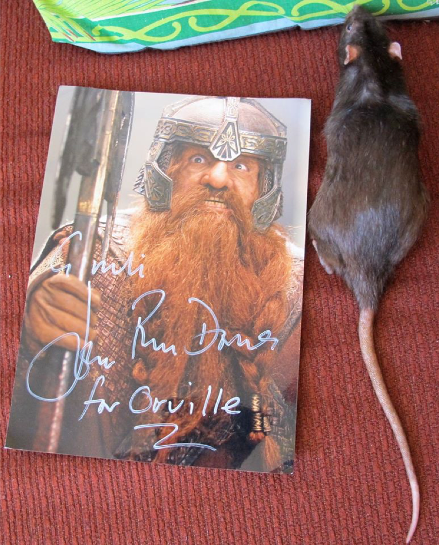Fan mail for Orville the Movie-Star Rat from John Rhys-Davies. CC BY