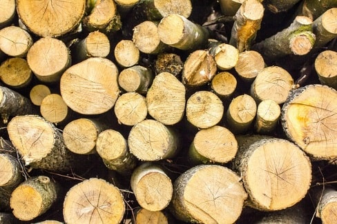 wood from tree thats been cut.jpg