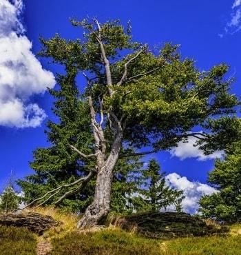 tree that needs tree service-min-min.jpg