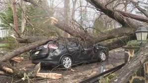 Emergency tree removal.jpg