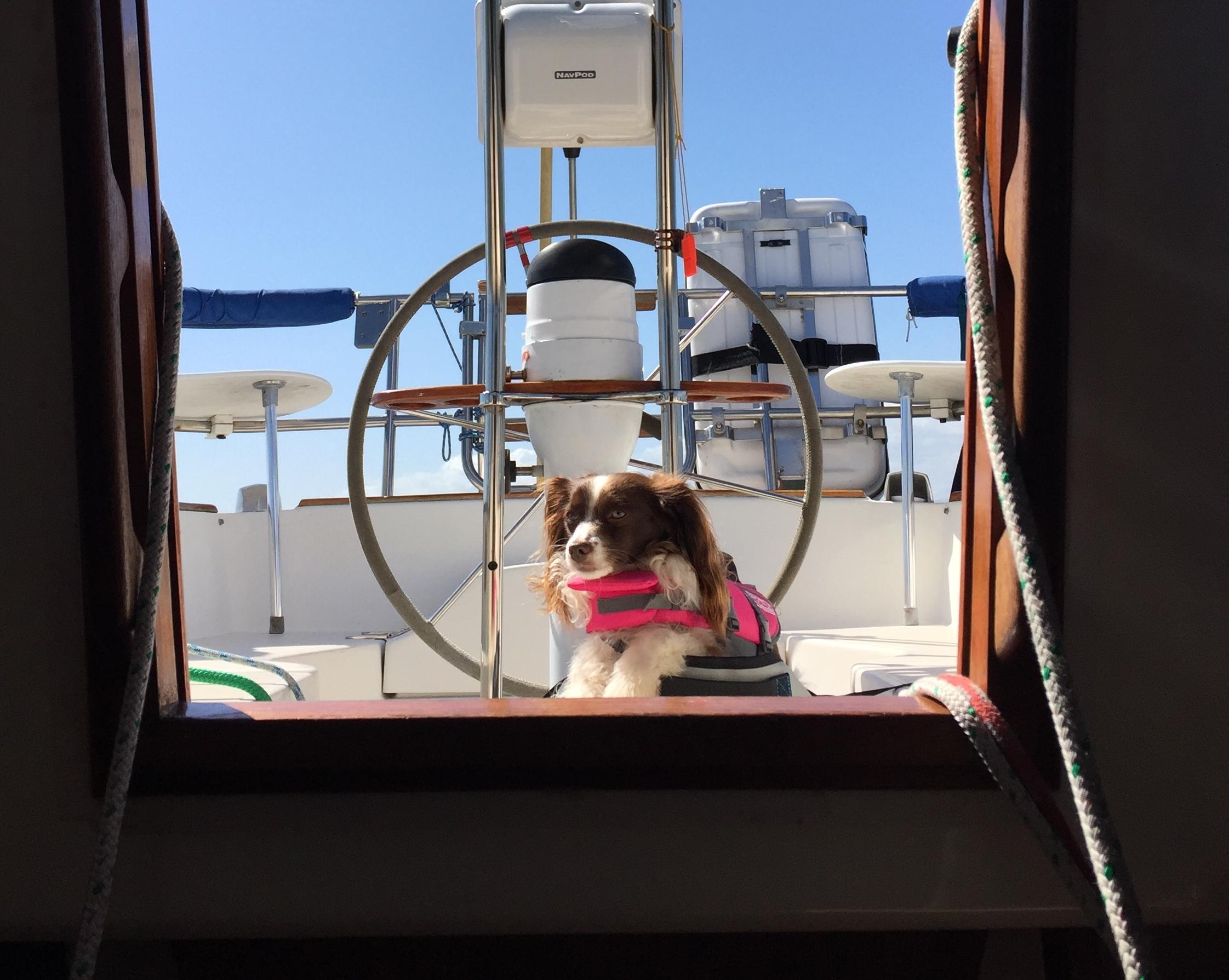about the dog - Jadzia