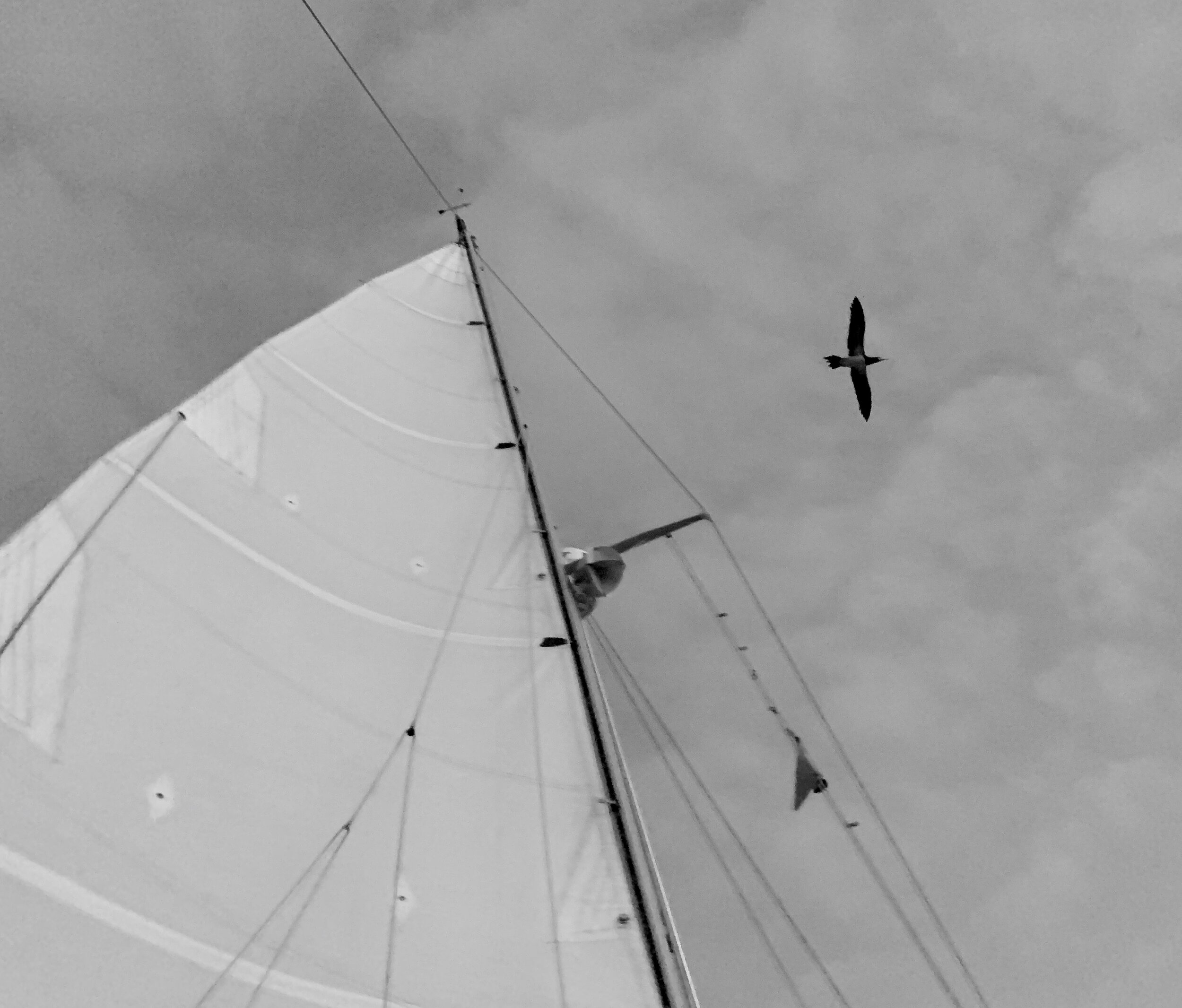 soaring bird overhead