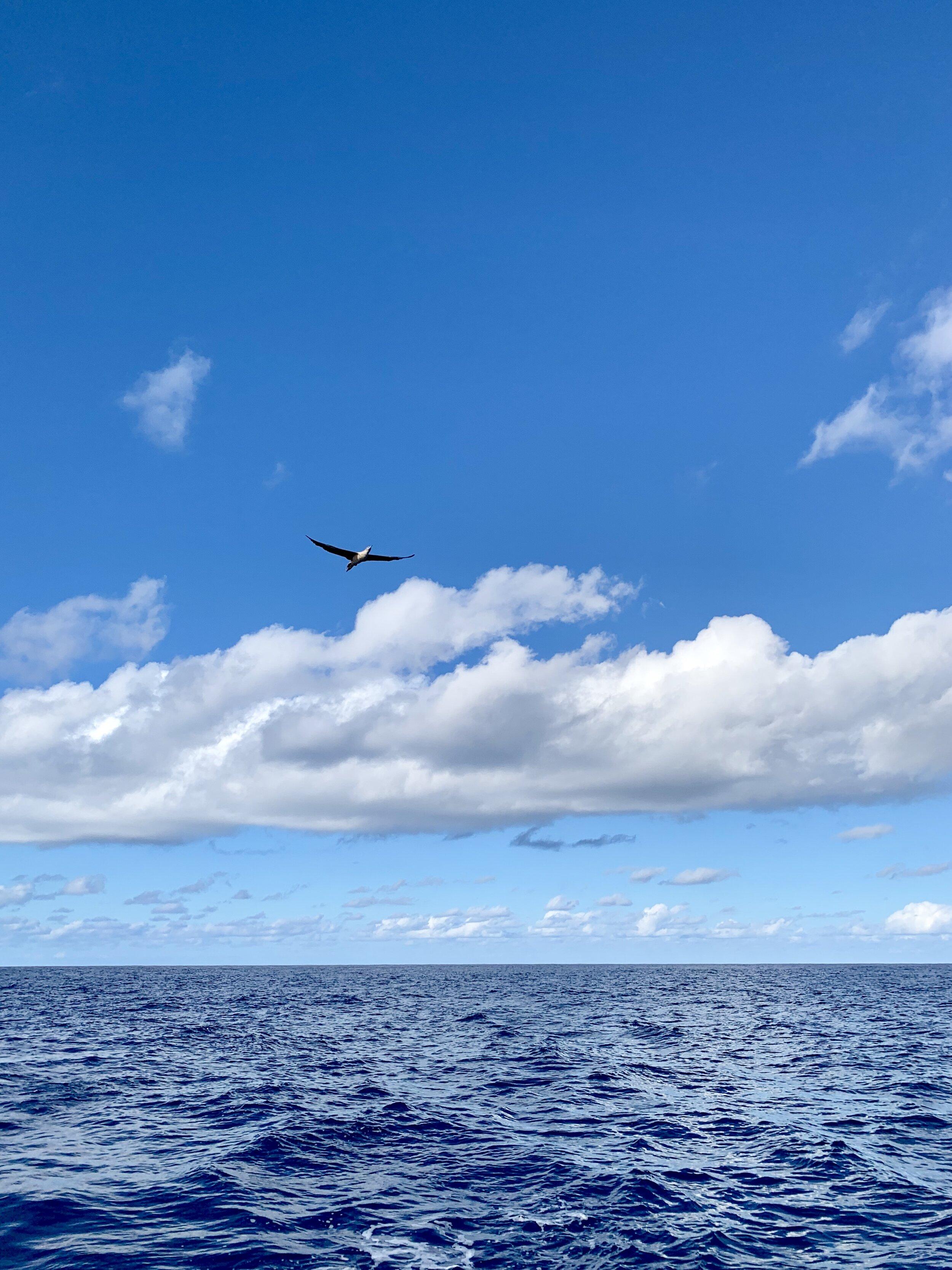 bluewaterbirdflying