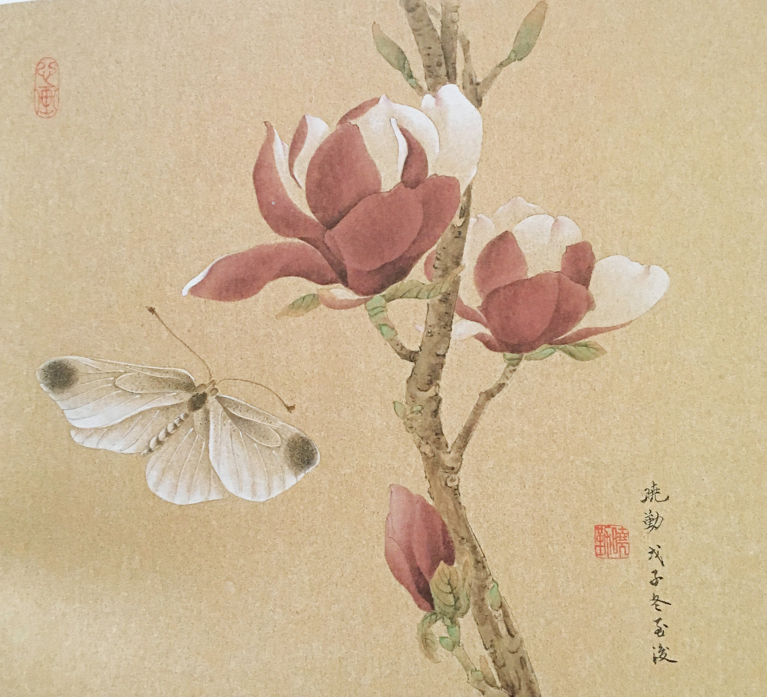 Magnolia with White Butterfly
