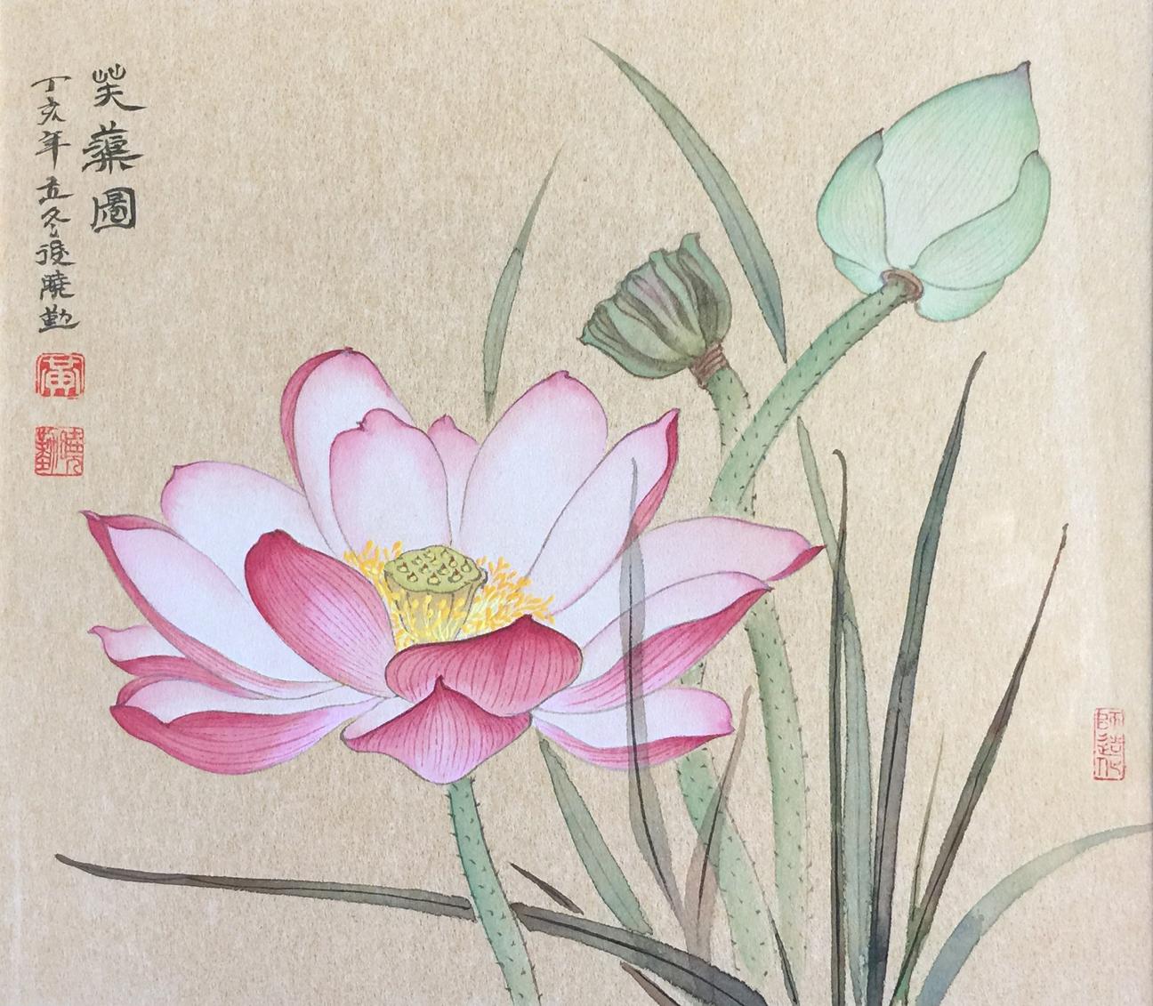 Pink Lotus and Buds