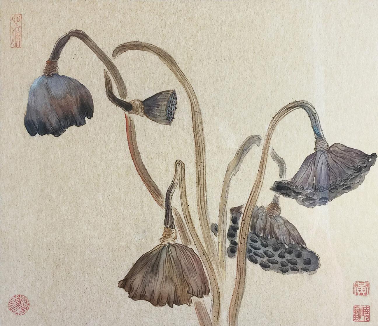 Dry Lotus Pods
