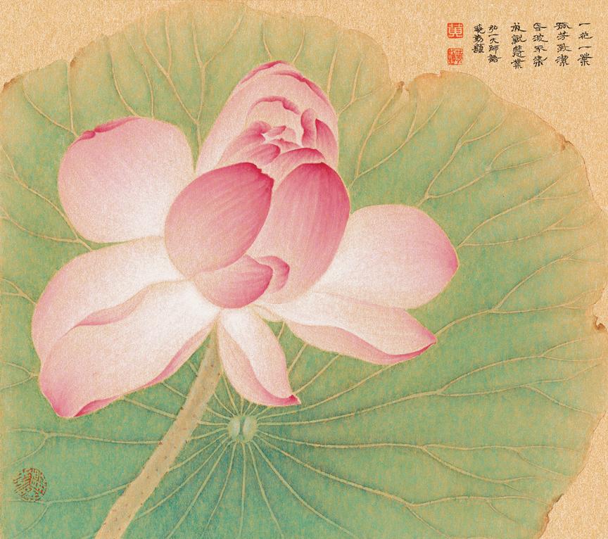 Pink Lotus over Lotus Leaf